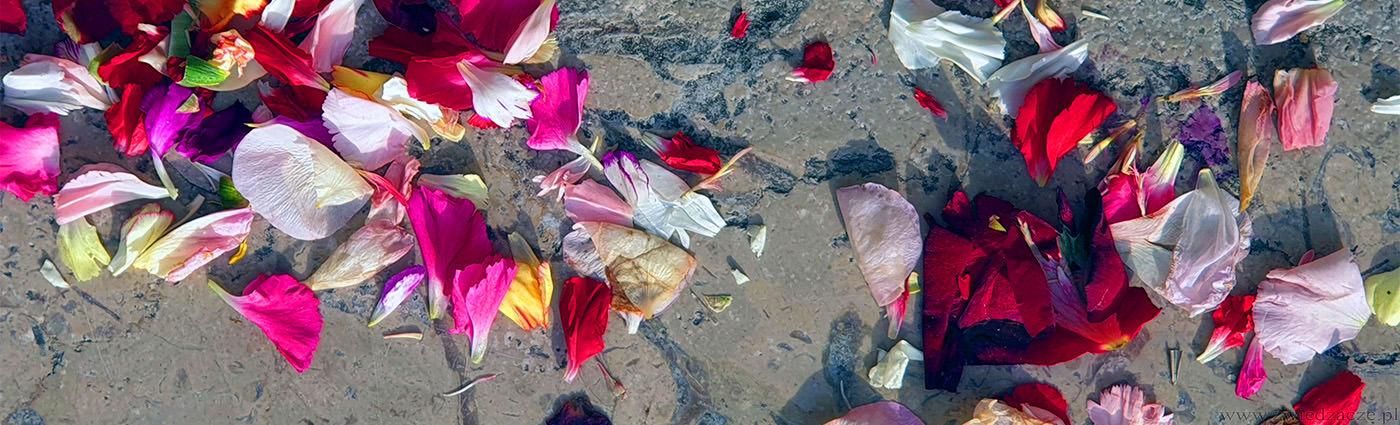kwiaty, płatki róż