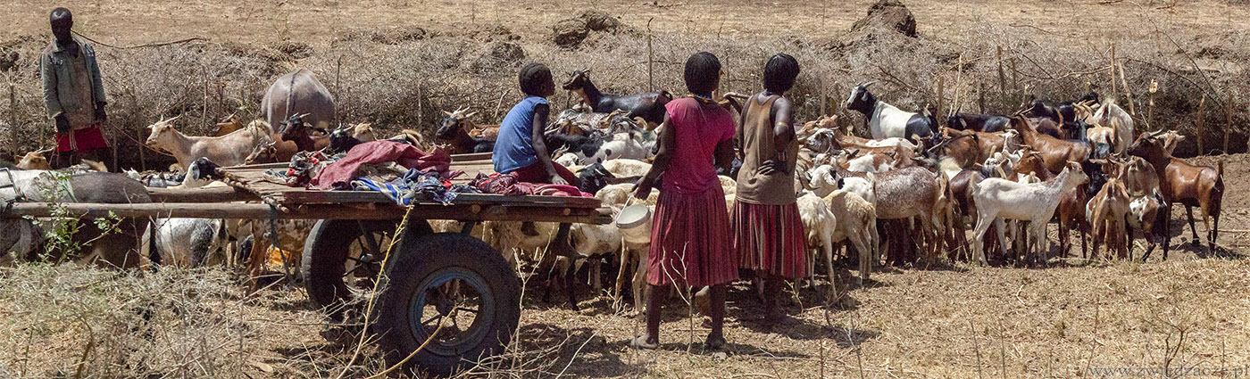 etiopia, dolina omo, pasterze